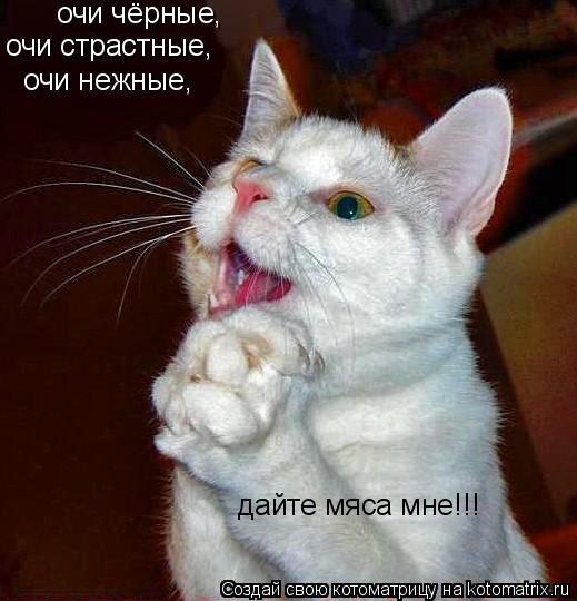 Котоматрица: очи чёрные, очи страстные, очи нежные, дайте мяса мне!!!