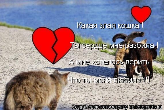 Котоматрица: Какая злая кошка ! Ты сердце мне разбила ! А мне хотелось верить  Что ты меня любила !!!