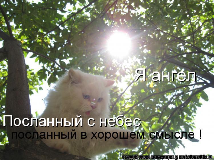Котоматрица: Я ангел  Посланный с небес  посланный в хорошем смысле !