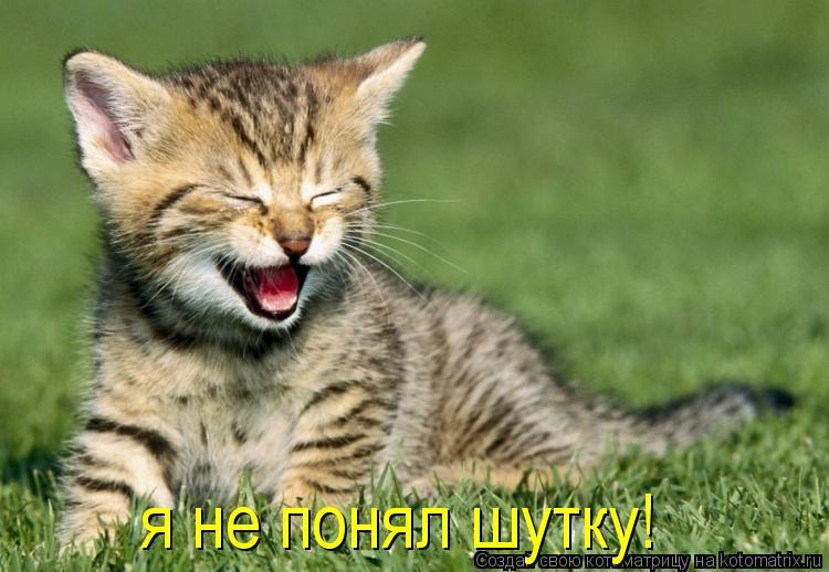 Котоматрица: я не понял шутку!