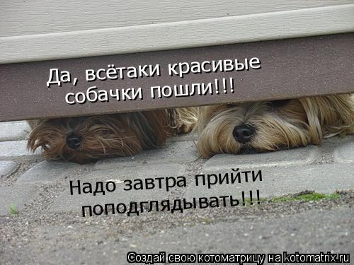 Котоматрица: Да, всётаки красивые собачки пошли!!! Надо завтра прийти поподглядывать!!!
