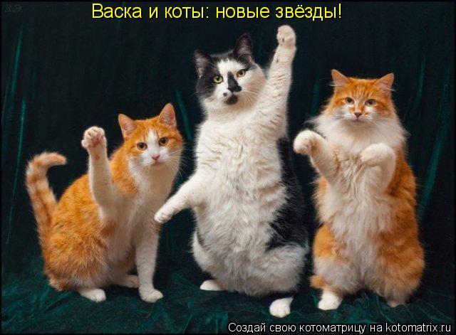 Котоматрица: Васка и коты: новые звёзды!