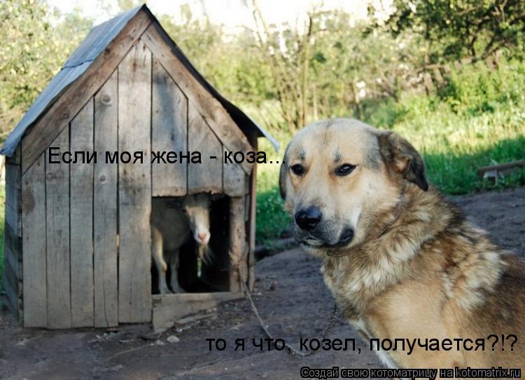 Если моя жена - коза... то я что, козел, получается?!?