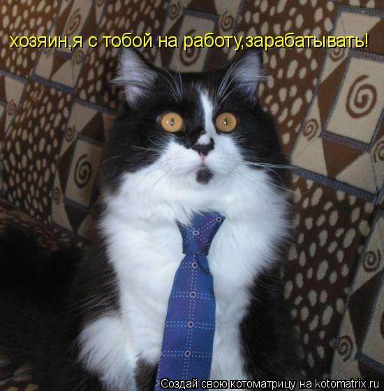 Котоматрица: хозяин,я с тобой на работу,зарабатывать!