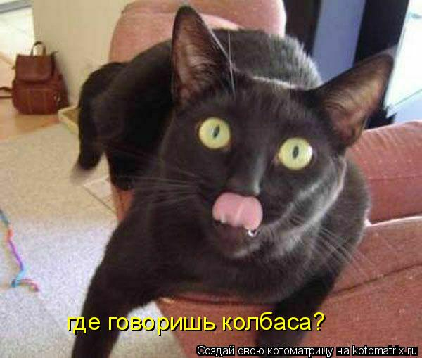 Котоматрица: где говоришь колбаса?