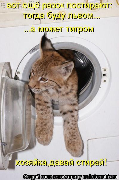 Котоматрица: тогда буду львом... вот ещё разок постирают:  тогда буду львом... ...а может тигром хозяйка,давай стирай!