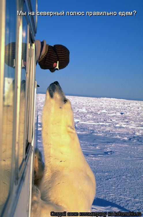 Котоматрица: Мы на северный полюс правильно едем?
