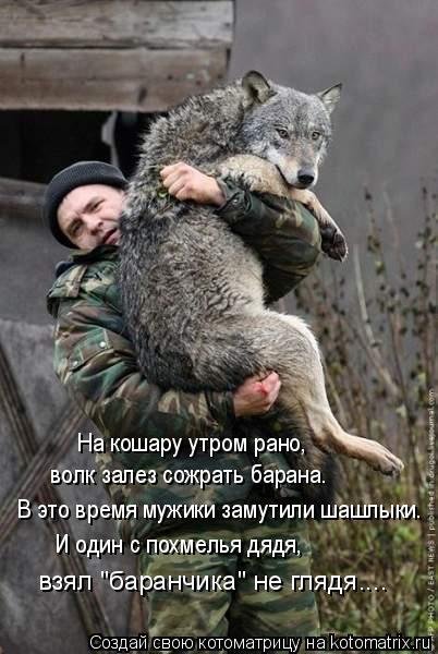 """Котоматрица: На кошару утром рано, волк залез сожрать барана. В это время мужики замутили шашлыки. И один с похмелья дядя,  взял """"баранчика"""" не глядя...."""