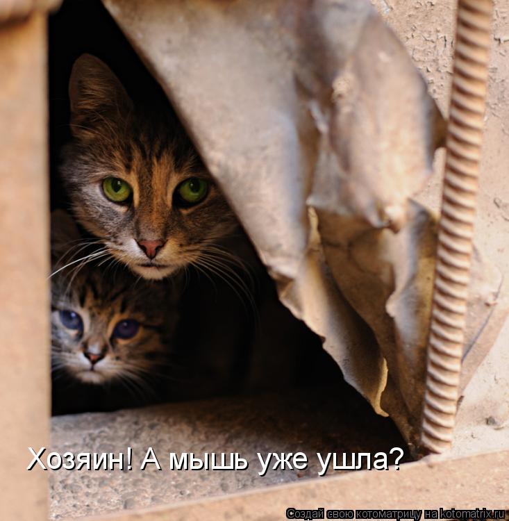 Котоматрица: Хозяин! А мышь уже ушла?
