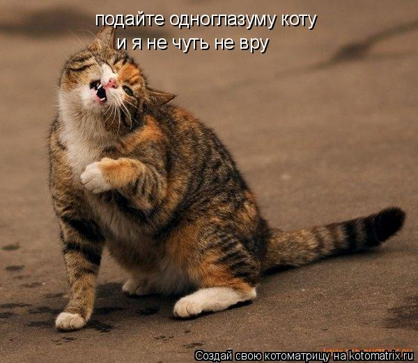 Котоматрица: подайте одноглазуму коту и я не чуть не вру