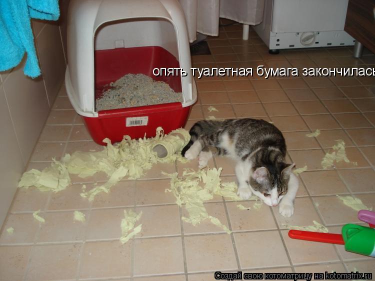 Котоматрица: опять туалетная бумага закончилась...