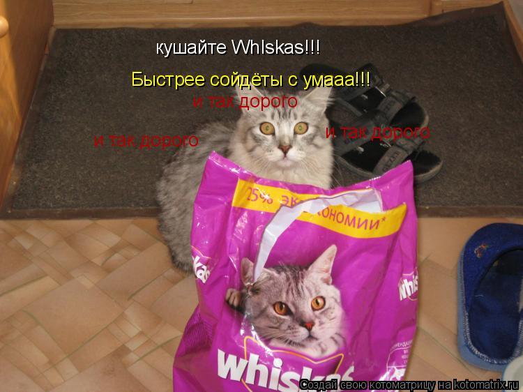 Котоматрица: кушайте WhIskas!!! Быстрее сойдёты с умааа!!! и так дорого и так дорого и так дорого