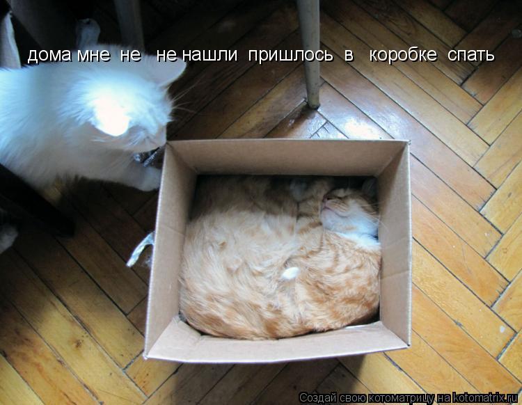Котоматрица: дома мне  не   не нашли  пришлось  в   коробке  спать