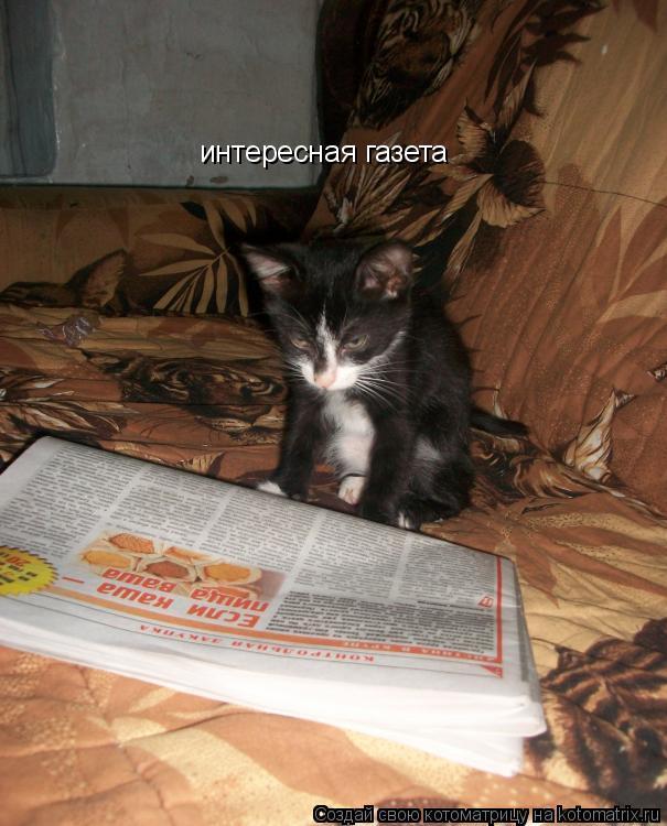 Котоматрица: интересная газета