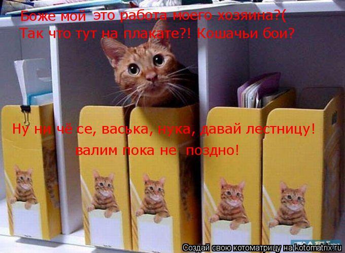 Котоматрица: Боже мой это работа моего хозяина?( Так что тут на плакате?! Кошачьи бои? Ну ни чё се, васька, нука, давай лестницу! валим пока не  поздно!