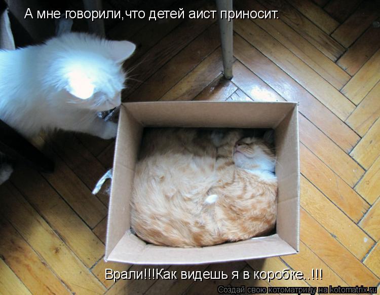 Котоматрица: А мне говорили,что детей аист приносит. Врали!!!Как видешь я в коробке..!!!