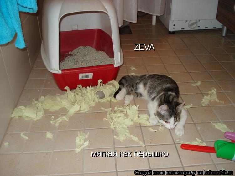 Котоматрица: ZEVA мягкая как пёрышко