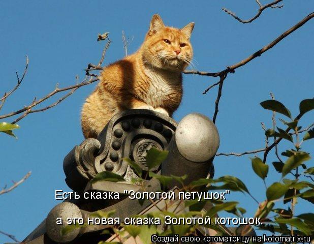 """Котоматрица: Есть сказка """"Золотой петушок""""  а это новая сказка Золотой котошок."""