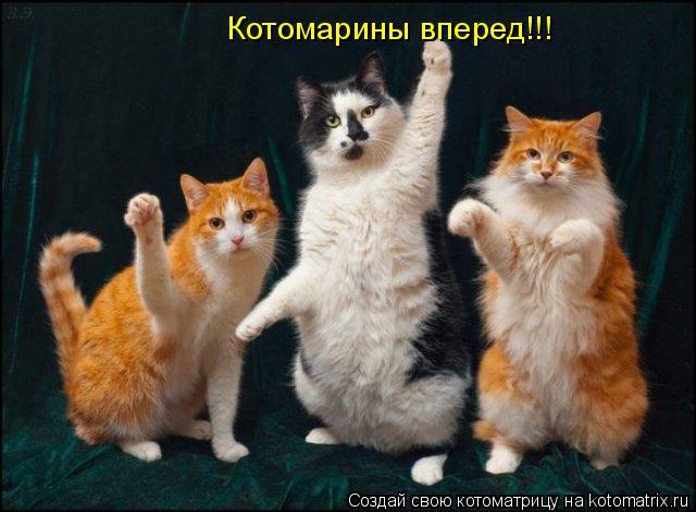 Котоматрица: Котомарины вперед!!!