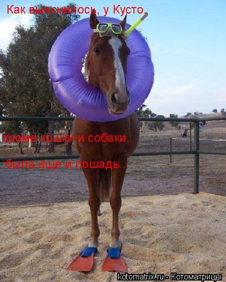 Котоматрица: Как выяснилось, у Кусто,   кроме кошки и собаки, была еще и лошадь...