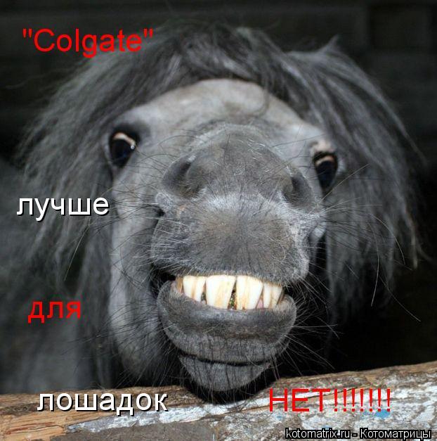 """Котоматрица: """"Colgate"""" для лучше лошадок НЕТ!!!!!!!"""