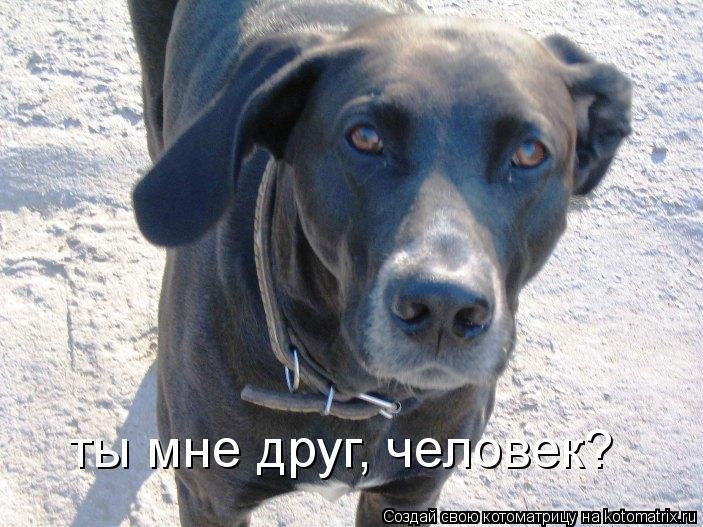 Котоматрица: ты мне друг, человек?