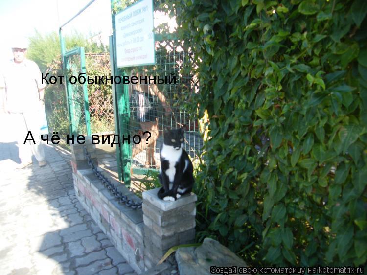 Котоматрица: Кот обыкновенный А чё не видно?
