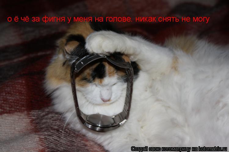 Котоматрица: о ё чё за фигня у меня на голове. никак снять не могу