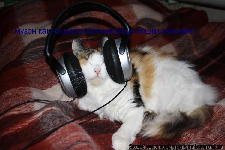 Котоматрица: музон как на диско котоматрицы кошки зажигают