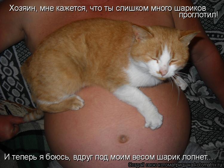 Котоматрица: Хозяин, мне кажется, что ты слишком много шариков проглотил! И теперь я боюсь, вдруг под моим весом шарик лопнет...