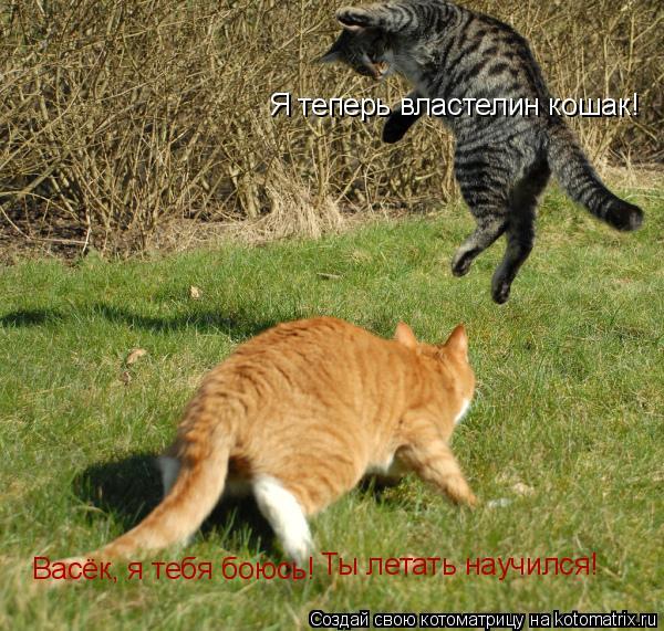 Котоматрица: Васёк, я тебя боюсь! Ты летать научился! Я теперь властелин кошак!