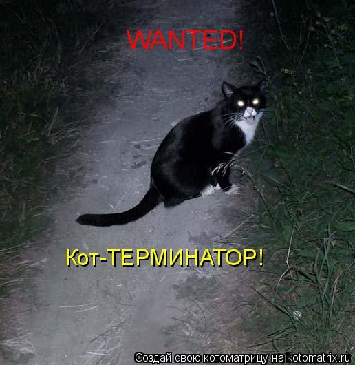 Котоматрица: WANTED! Кот-ТЕРМИНАТОР!