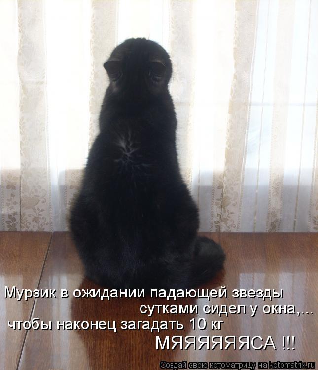 Котоматрица: Мурзик в ожидании падающей звезды сутками сидел у окна,... чтобы наконец загадать 10 кг   МЯЯЯЯЯЯСА !!!