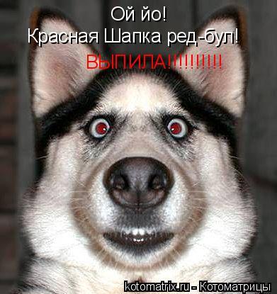 Котоматрица: Ой йо! Красная Шапка ред-бул! ВЫПИЛА!!!!!!!!!!