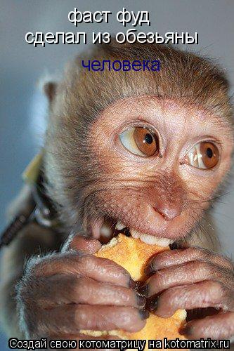 Котоматрица: фаст фуд    сделал из обезьяны человека