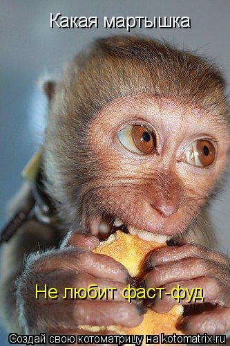 Котоматрица: Какая мартышка Не любит фаст-фуд
