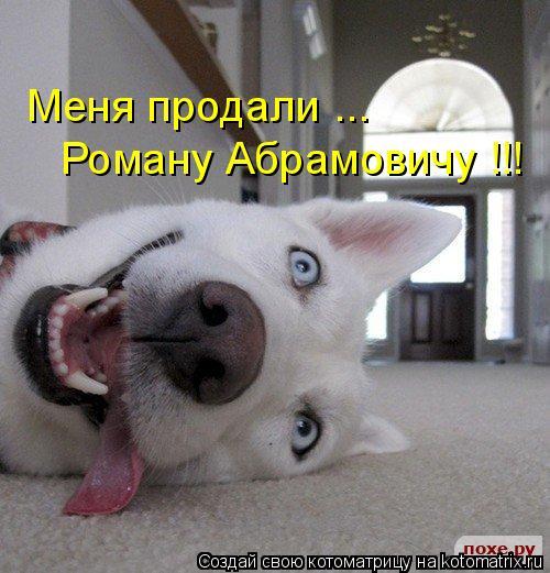 Котоматрица: Меня продали ...  Роману Абрамовичу !!!