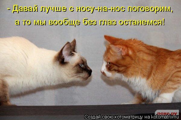 Котоматрица: - Давай лучше с носу-на-нос поговорим, а то мы вообще без глаз останемся!