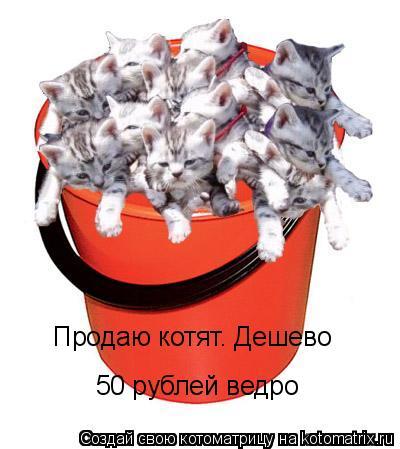 Котоматрица: Продаю котят. Дешево 50 рублей ведро