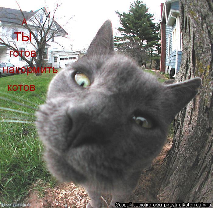 Котоматрица: А ТЫ готов накормить котов
