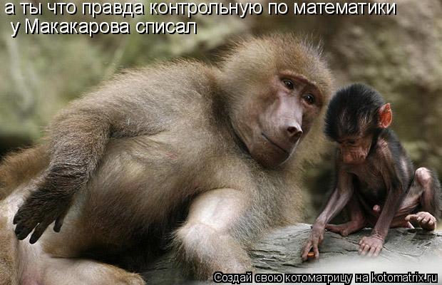 Котоматрица: а ты что правда контрольную по математики  у Макакарова списал  у Макакарова списал