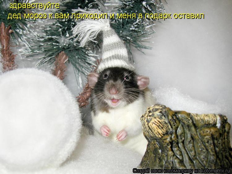 Котоматрица: здравствуйте  дед мороз к вам приходил и меня в подарк оставил