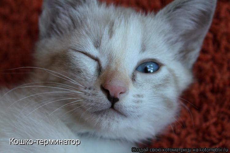 Котоматрица: Кошко-терминатор