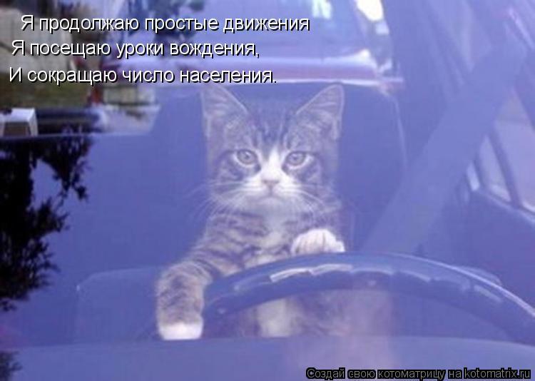 Котоматрица: Я продолжаю простые движения Я посещаю уроки вождения,  И сокращаю число населения.