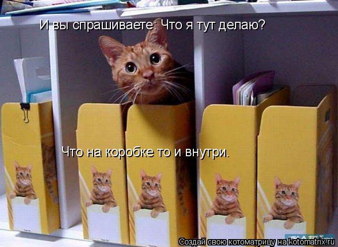 Котоматрица: И вы спрашиваете: Что я тут делаю? Что на коробке то и внутри.