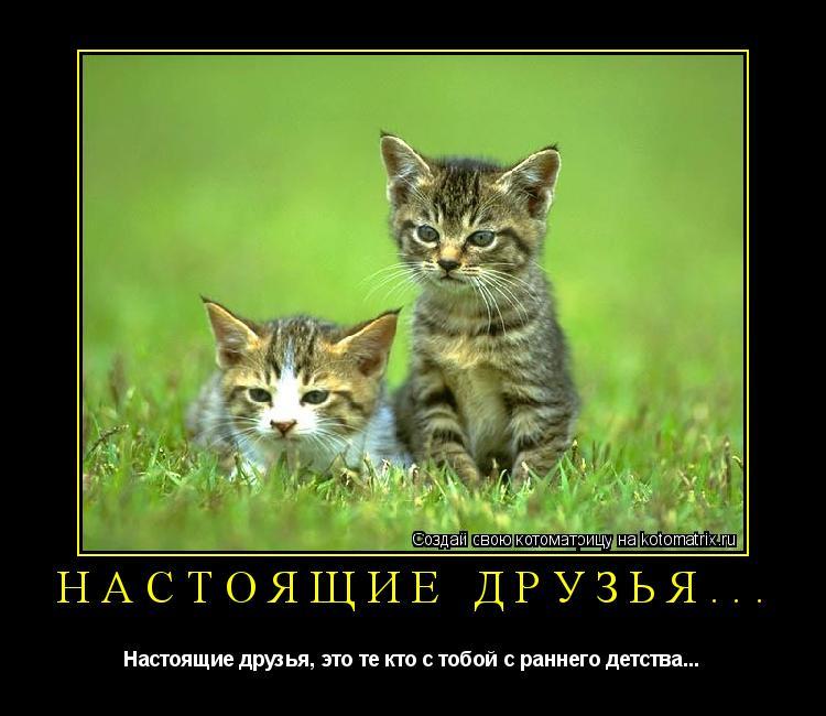 Котоматрица: Настоящие друзья... Настоящие друзья, это те кто с тобой с раннего детства...