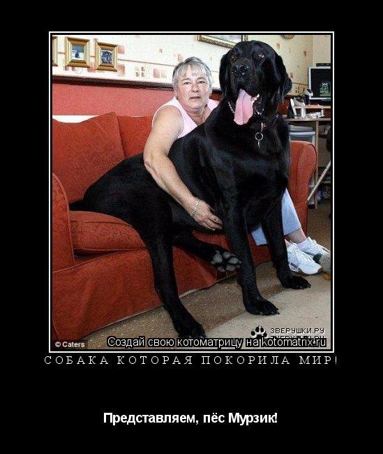 Котоматрица: Собака которая покорила мир! Представляем, пёс Мурзик!
