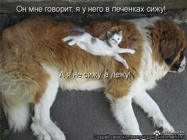 Котоматрица: Он мне говорит, я у него в печенках сижу!   А я не сижу, а лежу!