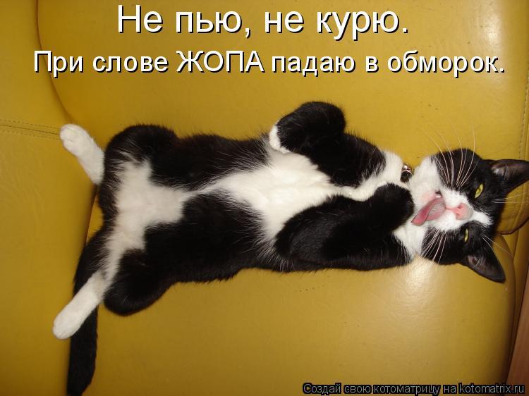 Котоматрица: Не пью, не курю. При слове ЖОПА падаю в обморок.