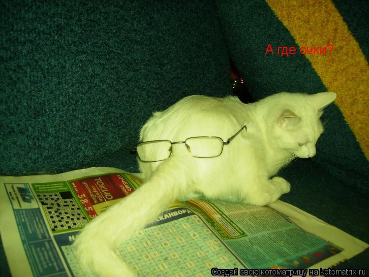 Котоматрица: А где очки?